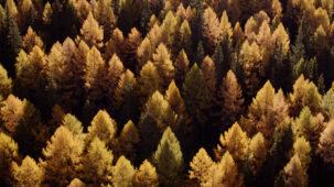 Autumn Alpine Forest