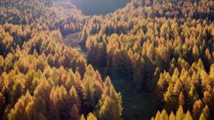 Autumn tree patterns
