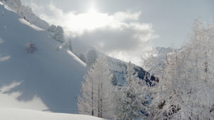 Austria, Tirol, Stubaital, Stubai valley, winter, Elfer, trees, snow, afternoon
