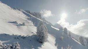 High Alpine trees in winter