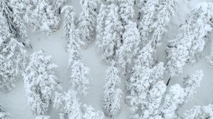 Winter trees Achensee 2