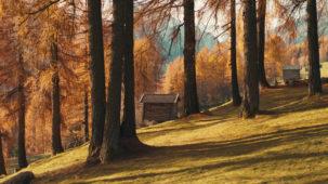 Autumn forest low & close