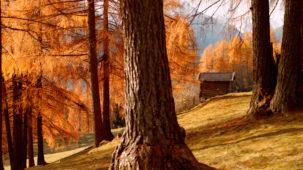 Autumn trees & meadows close