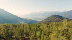 Larch forest and snowy peaks Seefeld